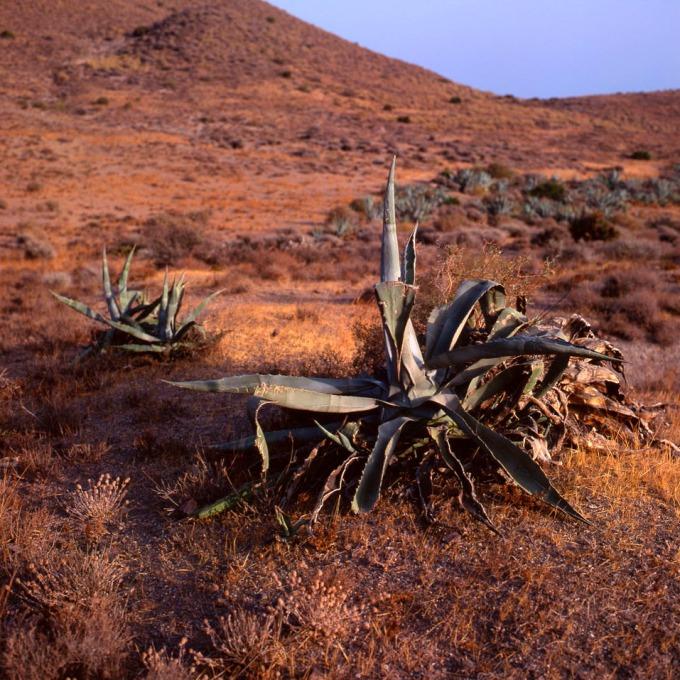 Parque Natural Cabo de Gata-Nijar