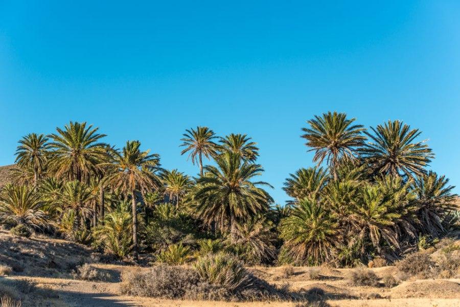 Parque Natural Cabo de Gata-Nijar 2013