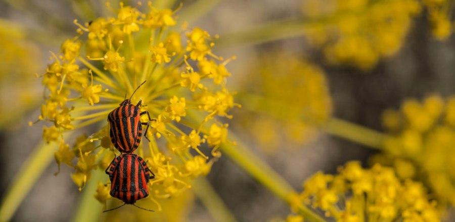 Insectos. El Barraco, Ávila.