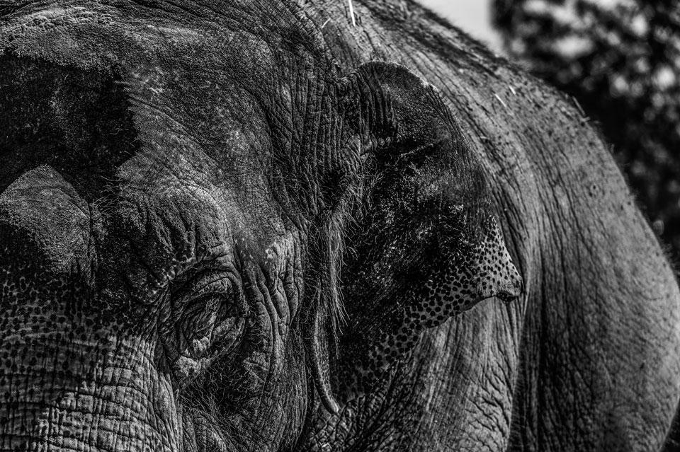 Elefante. Zoo-Aquarium de Madrid