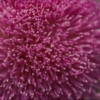 Flor, 2003.