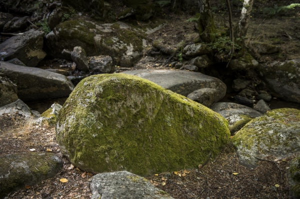 Piedra con musgo. Puerto de Canencia, Madrid.