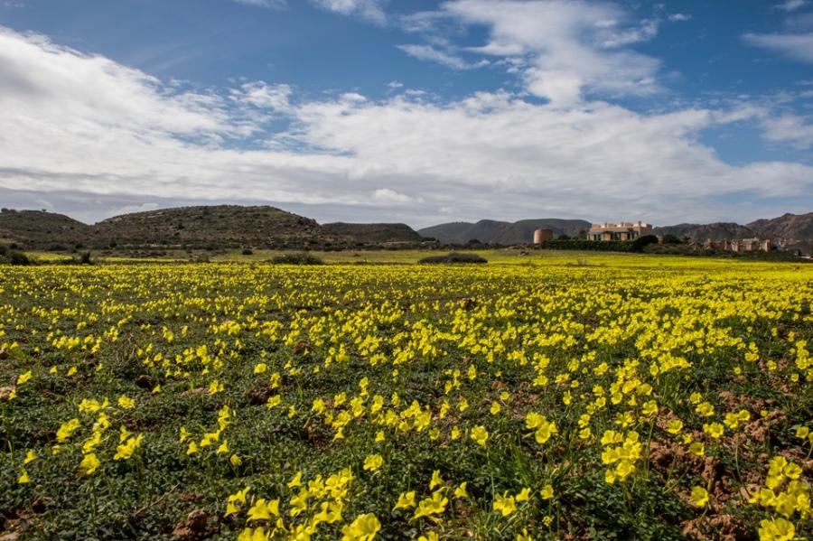 Valle de Rodalquilar, marzo de 2018.
